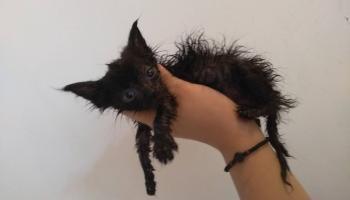 Не можешь - не берись: ветеринары о горе-владельцах домашних животных