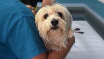 Praktiski ieteikumi, kā izvēlēties veterinārārstu un sagatavot suni klīnikas apmeklējumam