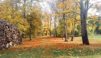 Senajā Laizānu parkā iestādīti jauni koki