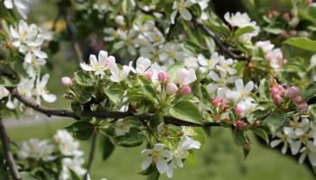 Pavasaris un mazais uzņēmējs laukos
