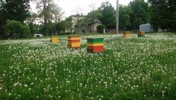 Biškopības muzejā iepazīstam dzeini, auli un dori