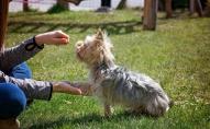 Uz suņu skolu mīlulis jāved noteikti: tas jādara jau kucēna vecumā