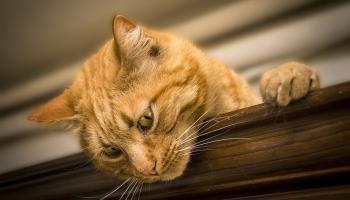 Темная сторона кошачьего желудка (ВИДЕО)