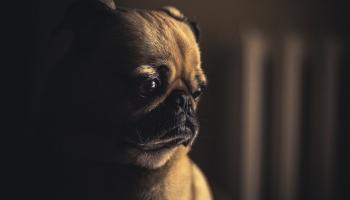 Липовый помет, или Просто ли создать собаке новую личность