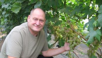 Gatis Kužums Bauskā audzē 500 šķirņu vīnogas un gatavo arī vīnu
