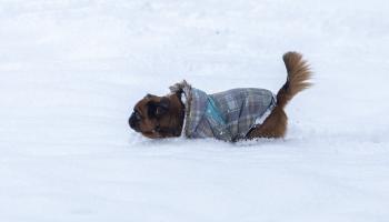 Suņa vai kaķa raisīta alerģija saimniekiem: kā ar to sadzīvot