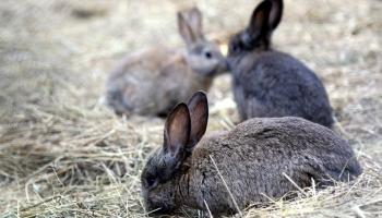 Числа Фибоначчи или Задача о кроликах, которая помогла понять мир