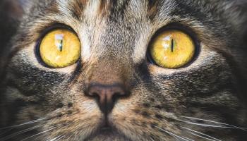 Подвалы немилосердия: правы ли те, кто выгоняет котов из подвалов?