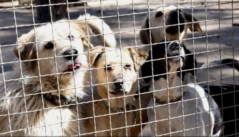 Nežēlīga izturēšanās pret dzīvniekiem: Kā situāciju kontrolē atbildīgā institūcija