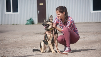 Елена Липска: В Латгалии самая сложная ситуация с бездомными животными