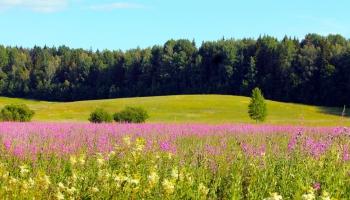Māksliniece un zinātniece sarunājas par personiskām attiecībām ar pļavas puķēm