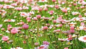 Botāniskajā dārzā var piedalīties Augu veselības gada orientēšanās spēlē