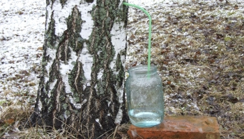 Sulu laiks: Pavasarī nevajadzētu dzert ūdeni, bet sulas
