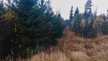 """""""Latvijas valsts mežu"""" kopšanai saņemti 200 pieteikumi"""