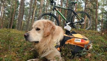 В Латвии появился первый пёс-видеооператор