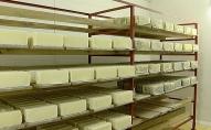 Trikātā atkal ražo sieru