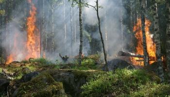 Siltā ziema, postošie ugunsgrēki: Saruna ar Pasaules dabas fonda direktoru Jānis Rozīti
