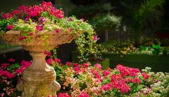 Dārza darbi: Ir laiks baudīt skaistos ziedus dārzā!