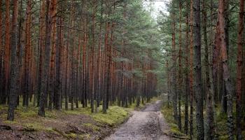 Kur Latvijā var apgūt zināšanas par mežu?