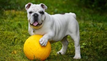 Послушный четвероногий друг: сколько времени займёт дрессировка собаки?