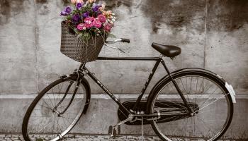 Велосипедисты и пешеходы - как им ужиться друг с другом?