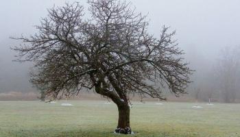 Как отсутствие снега и плюсовая температура повлияют на урожай?
