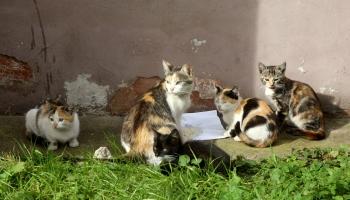 «Кошкин дурдом»: ветеринары против кошачьего городка в Риге