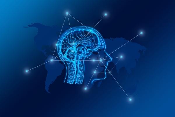 Smadzeņu evolūcija: senākās un jaunākās struktūras