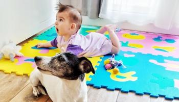 Suns un bērns ģimenē: kā izveidot pareizu hierarhiju un sunim neļaut būt noteicējam