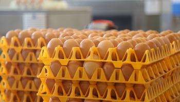 """Яйца от """"счастливых кур"""" и тех, кого держат в клетках: а есть ли разница?"""
