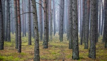 LR2 klausītāju īpašie koku stāsti!