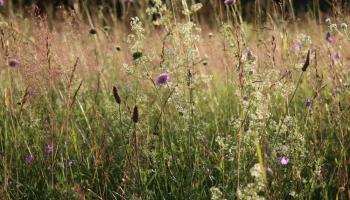 Dabiskās pļavas