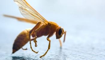 Kā sadzīvot ar kukaiņiem karstajā vasarā?