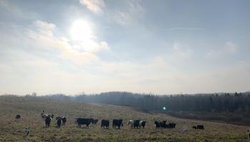 Darījumus ar lauksaimniecības zemi Latvijā varēs veikt arī OECD valstu pilsoņi