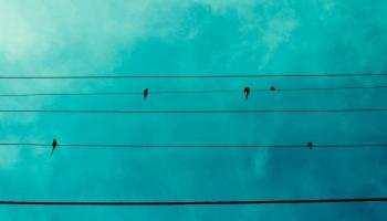 Putnu sugas, kas kļuvušas parastas. Kas ir aprites ekonomika?