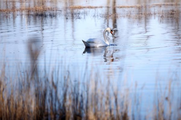 Saldūdens zivis: Upju un ezeru zivju patēriņš Latvijā ir ļoti zems