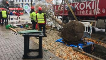 Rīgas dome vēlas koku stādīšanā izmantot aktīvistu ieviestās tehnoloģijas