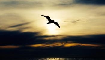 Kā iegūt garīgu gudrību lēmumu pieņemšanā?