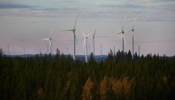 Vēja enerģijas nozare iekārojusi valsts mežus, ar naudu cer samierināt pašvaldības