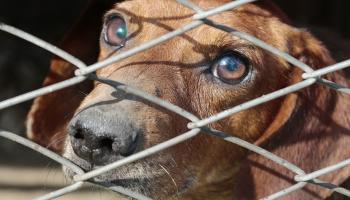 Активисты: животное не игрушка