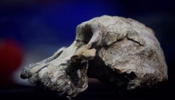 Etiopijā atrastā hominīda galvaskauss sniegs jaunas zināšanas par cilvēka izcelšanos