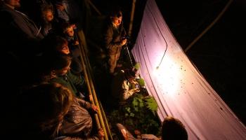 Kukaiņu nakts dzīve, arheologu atradumi Popē, skaistumkopšana viduslaikos