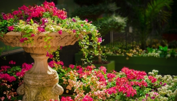 Arī mazdārziņos izmanto pesticīdus, bieži vairāk nekā ir norādītās devas