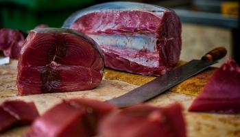Tuncis: visapdraudētākie pasaulē ir zilspuru tunči to vērtīgas gaļas dēļ