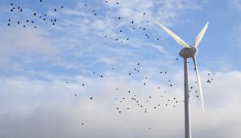 Зеленая энергетика завтрашнего дня и эко-эволюция индустрий