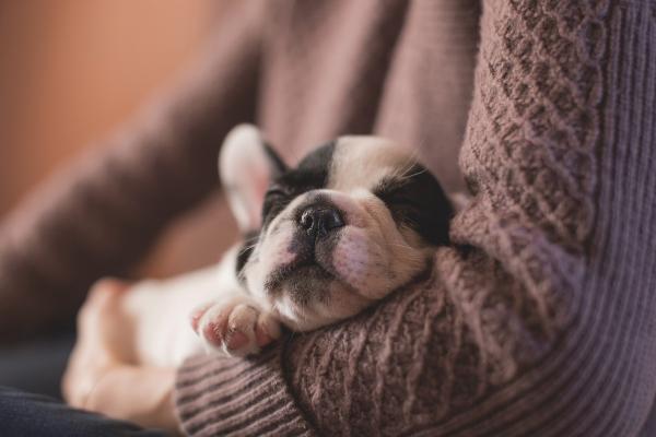 Miega artērijas sašaurinājumi ietekmē cilvēka kognitīvos procesus