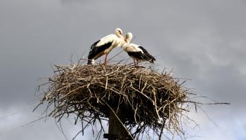 Видеонаблюдение за птицами: как это работает?