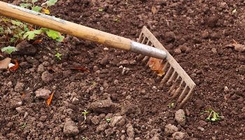 Maija nogales aktuālie darbi dārzā