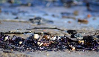 Балтийское море погибает?
