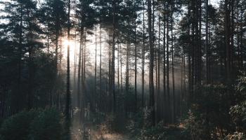 Meža īpašniekiem pieejami vēl 7 miljoni eiro
